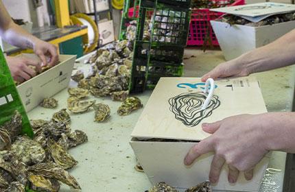 bourriche d'huîtres fines, préparation à l'expédition