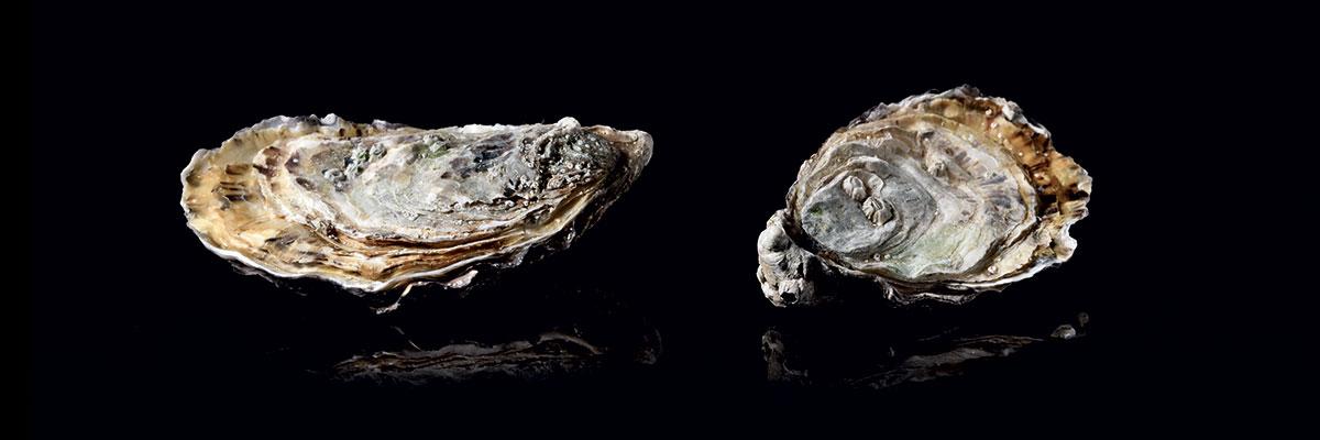 Huîtres fine et spéciale sur fond noir